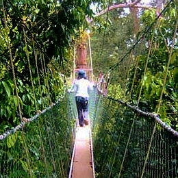 Australian Tall Building Lookouts Sky Walk Rainforest Canopy Walk Tree Top Walk Fly Walks & Australian Tall Building Lookouts Sky Walk Rainforest Canopy ...