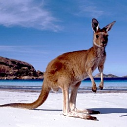 Australian tourist information centres visitor centres tourist bureaus travel guides and - Australian tourism office ...